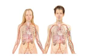Featured image for Anatomy category image